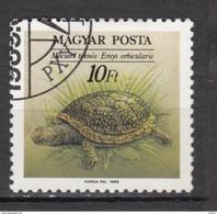 Hongrie, Hungary, Tortue, Turtle - Schildkröten