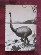 France 1958 Medecine Advertising Postcard Bird Moa Dinornis Fossil To France - Oiseaux