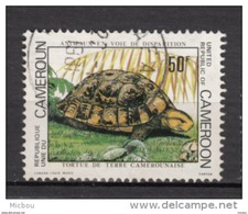 Cameroune, Cameroun, Cameroon, Tortue, Turtle, Champignon, Mushroom - Tortugas