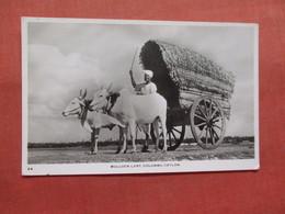 Bullock Cart  Colombo  Sri Lanka (Ceylon)  Ref 3827 - Sri Lanka (Ceylon)