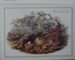 Petit Calendrier Poche 2003 Dessin De Gould Oiseau Bécasse Des Bois - Kalenders