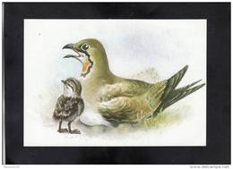 GLAREOLA PRATINCOLA, ** - Vogels