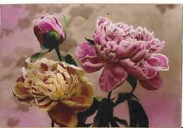 CPA PIVOINES - Fleurs