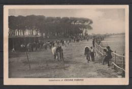 Cecina Marina (Pisa) Ippodomo Taglietto In Basso A Destra - Pisa