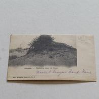 KOKSIJDE - Végétation Dans Les Dunes - Envoyée - Nels Série 80 N°19 - Avant 1905 - Koksijde