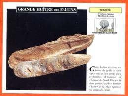 GRANDE HUITRE DES FALUNS  Histoire Préhistoire Fiche Illustree - Storia