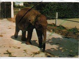LESSAY ZOO L'ELEPHANT - Francia