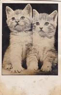 AK 2 Kleine Katzen - Katzenbabys - 1956 (46676) - Katzen