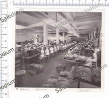 PERUGIA - PERUGINA CARAMELLA CIOCCOLATO CHOCOLATE  Incisione - Immagine Ritagliata Da Pubblicazione Originale D'epoca - Immagine Tagliata