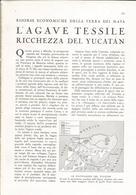 L'AGAVE TESSILE RICCHEZZA DEL YUCATAN    1939 ARTICOLO RITAGLIATO DA GIORNALE (1028) - Altri