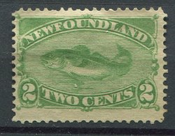 Terre Neuve Neuf Sans Gomme N° 36 - 2c Vert Morue - Newfoundland