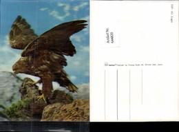 644820,3-D 3 D Karte Adler Eagle Vogel 3D-Color - Ansichtskarten