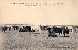 13 - Les Stes - MARIES -de-la-MER - Taureaux Et Chevaux Sauvages De La Manade - - Saintes Maries De La Mer