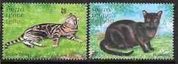 Sierra Leone Timbres Avec Avec Chats - Hauskatzen