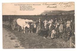 Les Vendanges En Maconnais  -  Attelage - Vignes - Vins - CPA° - France