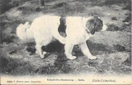KALMTHOUT - Scoolvilla Diesterweg - BELLA EN TOM DE KINDERVRIENDEN - CHIEN / DOG - Heide-Calmpthout - 2 Scans - Kalmthout