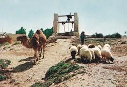 CP Tunisie Djerba Puits - Tunisia
