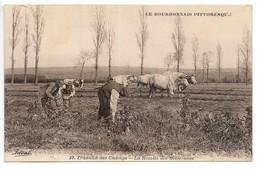 Cpa...le Bourbonnais Pittoresque...travaux Des Champs...la Récolte Des Betteraves...attelages De Boeufs...animée... - Attelages