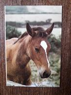L20/170 Mini Calendrier Publicitaire. 1989. Cheval . Lire . Plomberie / Chauffage / Electricité .... - Calendars