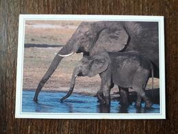 L20/173 Mini Calendrier Publicitaire. 2003. Elephants . Grenoble . Imprimerie - Kalenders