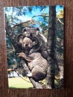 L20/174 Mini Calendrier Publicitaire. 1990. Koalas . Cosne Sur Loire . Pressing - Calendars