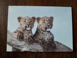 L20/176 Mini Calendrier Publicitaire. 2001. Leopards . Chateaubriant . Tabac / Presse - Kalenders