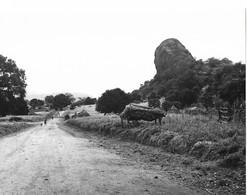 "Photo Soudan  La Route ""principale"" Traversant La Province D' Eastern Equatoria Photo Vivant Univers. - Afrika"