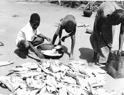 Photo Soudan Du Sud Récolte Du Maïs à Tombura Photo Vivant Univers. - Afrika