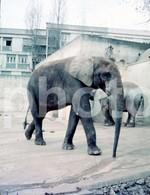 1971 ELEPHANT ZOO JARDIM ZOOLOGICO LISBOA PORTUGAL 35mm AMATEUR DIAPOSITIVE HALF FRAME SLIDE Not PHOTO No FOTO B4946 - Diapositives