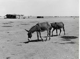 Photo Soudan Paysage Type De La Bordure Nord Du Sahel. Photo Vivant Univers. - Afrika