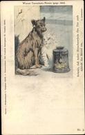 Artiste Cp Kuhrner, Hund Und Katze Bitten Um Spende, Wiener Tierschutz Verein - Animals