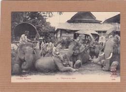 CPA Laos éléphants Au Repos Cliché Raquez - Laos