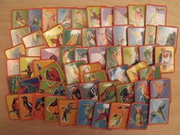 Lot De 60 Images Plastique Oiseaux Merveilleux. Collection Complète. Cafés Maurice. Café France. Lot 29 - Documentos Antiguos