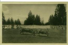 SWITZERLAND - CRANS / MONTANA - COMBAT DE REINES - PHOTO CH. DUBOST - 1930s ( 7124) - VS Valais