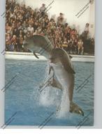 TIERE - DELFIN / DELPHIN / DOLPHIN / DAUPHIN - Zoo Duisburg - Delfini