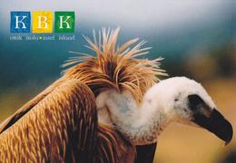 Croatia, Animals, Birds Of Prey, Griffon Vulture - Birds