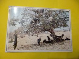 Maroc Typique  Chèvres Sur L'arganier ( Ecrite + Timbre ) - Zebras