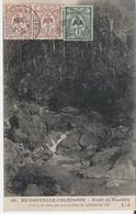 NOUVELLE CALEDONIE. CPA Voyagée En 1905 Forêt De Niaoulis - Nouvelle Calédonie