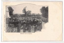 Siam- Elephant Hunt At Ayuthia,J. Antonio- No 247 - Thaïlande