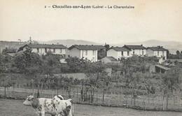 CARTE POSTALE ORIGINALE ANCIENNE : CHAZELLES SUR LYON LA CHARENTAISE VACHES AU PRE LOIRE (42) - Sonstige Gemeinden