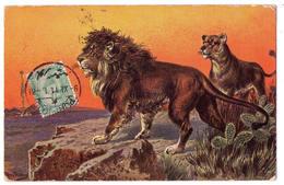 "6478 - Animaux ( Lions ) - Série : 562 - Fauna I. N°1 - C.A - Cp Signée "" Perlberg "" - - Perlberg, F."