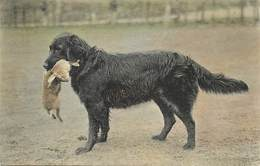 -themes Div.-ref-DD428 - Chiens - Chien - Dogs - Dog- Chien De Chasse Et Lapin -lievre - - Dogs