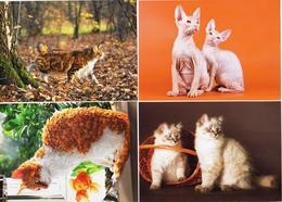Russia 2020 Set 4 Postal Cards Cats Cat Chats Chat - Gatos Domésticos