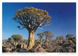 Namibia AK Keetmanshoop Köcherbäume - Namibia