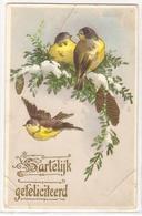AN 448,  OLD  FANTASY POSTCARD  , BIRDS ,FINE ART , PAINTINGS , - Oiseaux