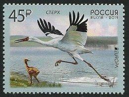 "RUSIA 2019 /RUSSLAND /RUSSIA - EUROPA 2019 -"" AVES - BIRDS - VÖGEL - OISEAUX""- GRULLA BLANCA DE SIBERIA - SERIE De 1 V. - 2019"