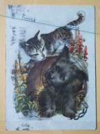 KOV 502-1 - CAT, CHAT, DOG, CHIEN - Katten