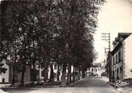 29-LA FORET FOUESNANT-N°233-B/0167 - La Forêt-Fouesnant