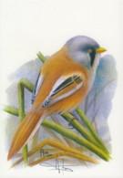 CB120 - Mésange à Moustaches / Baardmeres (Panurus Biarmicus) - Carte Signée - 1985-.. Oiseaux (Buzin)