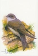 CB121a - Hirondelle De Rivage / Oeverswaluw (Riparia Riparia) - Carte Signée - 1985-.. Oiseaux (Buzin)